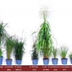 水稻基因體研究新里程碑