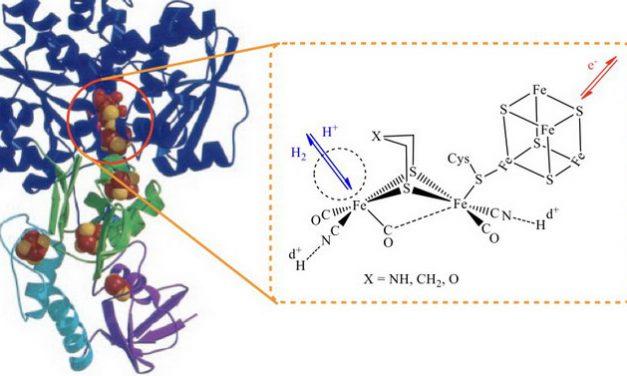 解析金屬酵素催化機制為設計人造觸媒用於能源轉換的關鍵