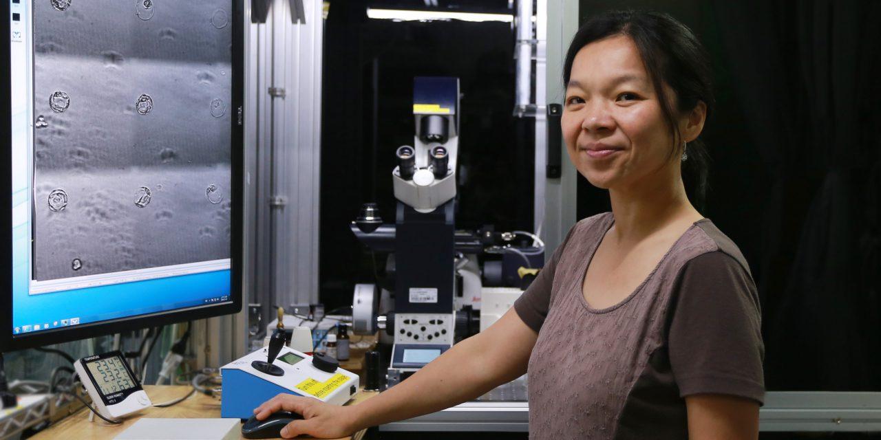 培養細胞的新技術──「吹泡泡」製作細胞鷹架