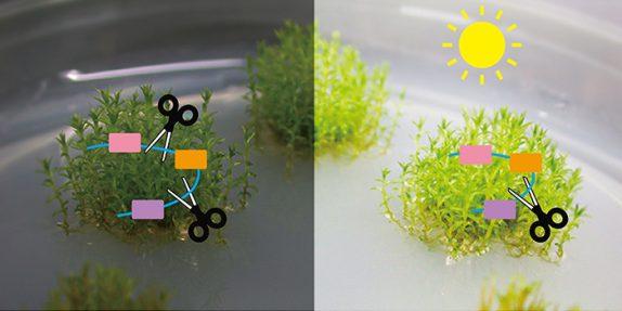 為什麼不開花?本院發現植物新型態的基因表現調控機制
