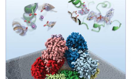 「把生物分子看得更清楚!」結構生物學最新神器--冷凍電子顯微鏡
