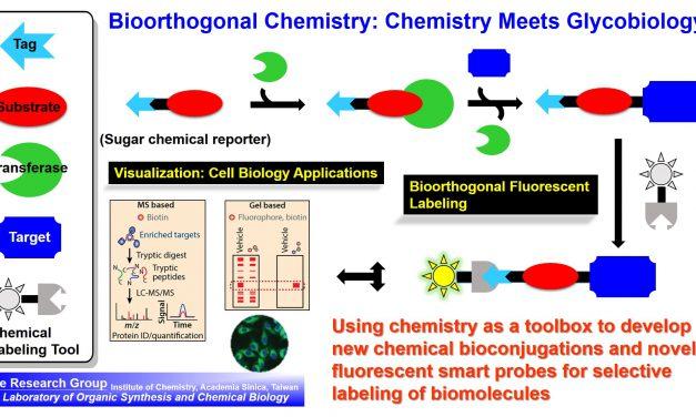 【專欄】有機化學與生命科學美麗的結合:生物正交性化學