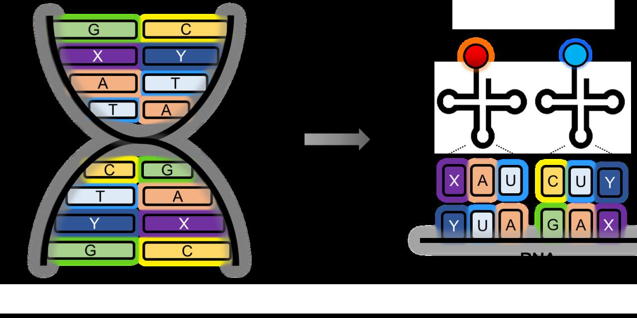 【專欄】基因密碼轉譯的闖關遊戲:非典型胺基酸體內嵌入研究發展