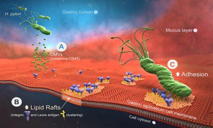 胃幽門螺旋桿菌感染之病症 發現新治療標的