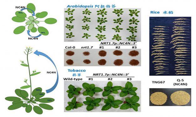 植物也要資源回收?硝酸鹽轉換再利用,提高作物產量兼顧環保
