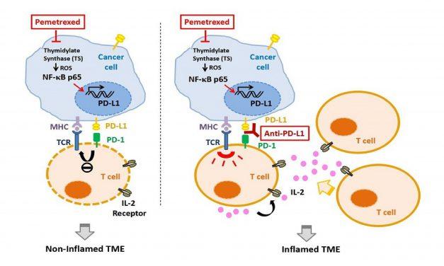 肺癌治療新選擇! 化學治療合併腫瘤免疫療法