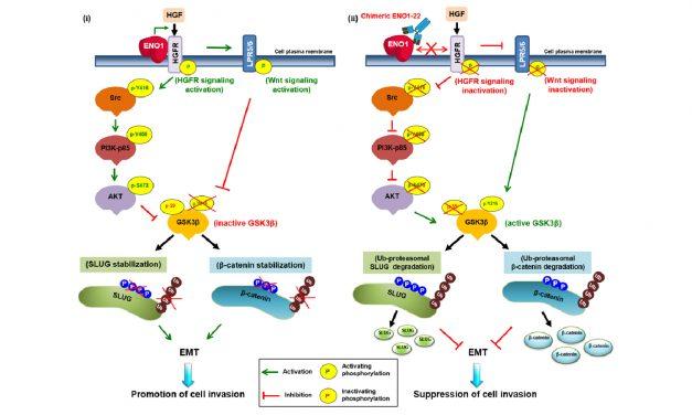 肺癌惡化機制新發現!新研發抗體大幅降低癌症形成及轉移