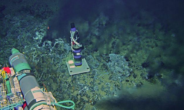 從深海棲地的聲景 聽見人為噪音造成的生態隱憂