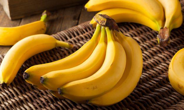 【專欄】植物細胞質DNA的秘密:香蕉的親子鑑定